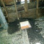 Bat Feces in the attic